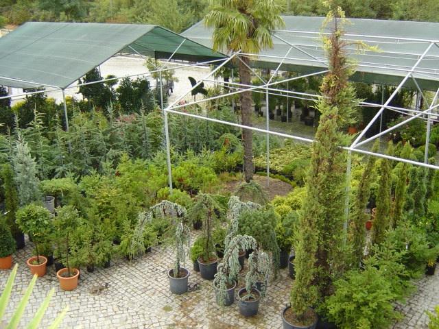 pedras para jardim viseu : pedras para jardim viseu: Viseu e na Guarda. Equipamentos e Projectos de Jardins em Viseu